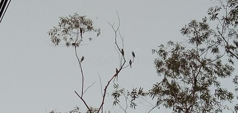 A tree few birds in blue sky stock image