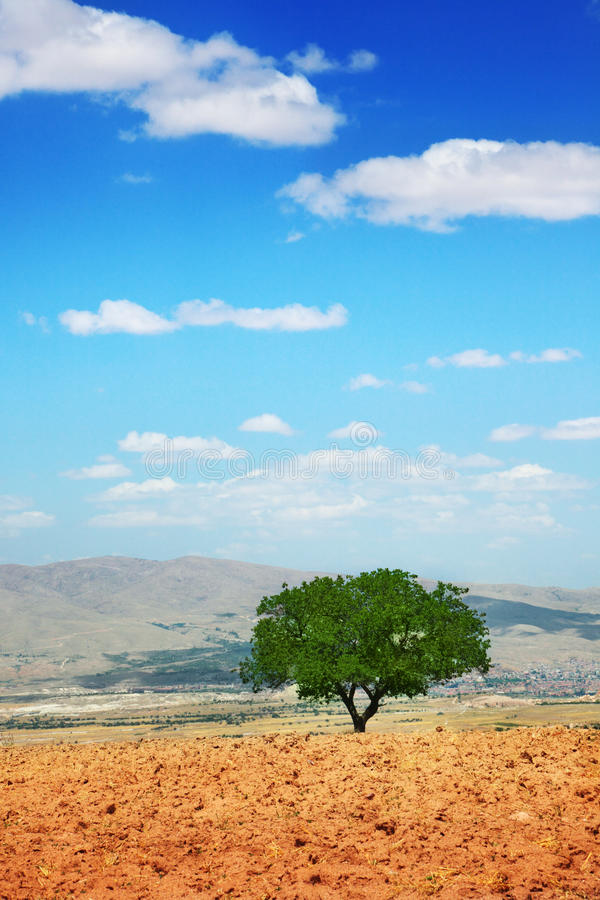 Tree in a field royalty free stock photos
