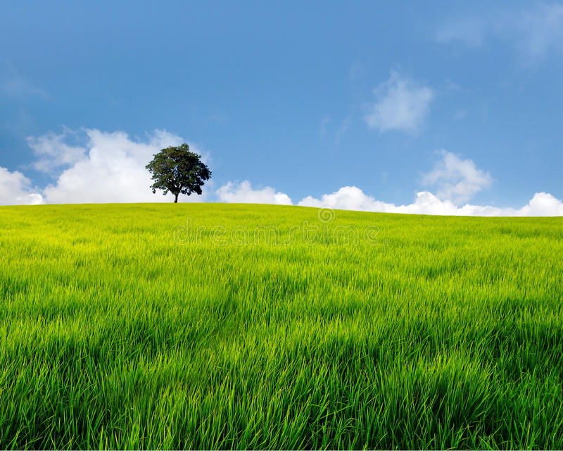 Tree on field royalty free stock photo