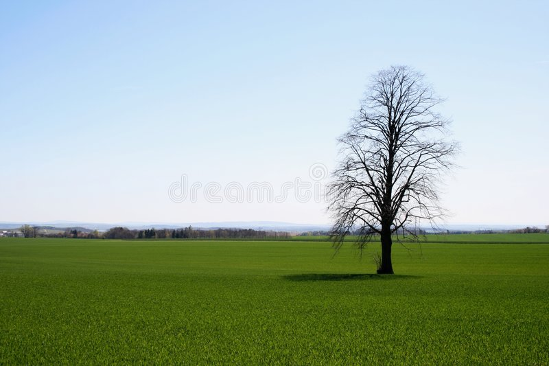 Download Tree on field stock photo. Image of branch, green, grass - 2282018