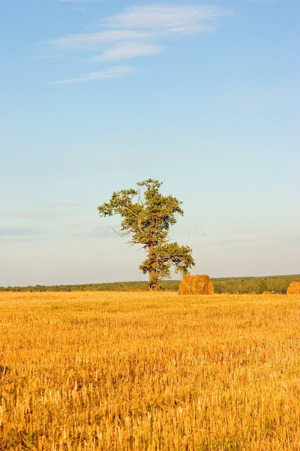 Tree on field. Hayrick under tree on field royalty free stock photos