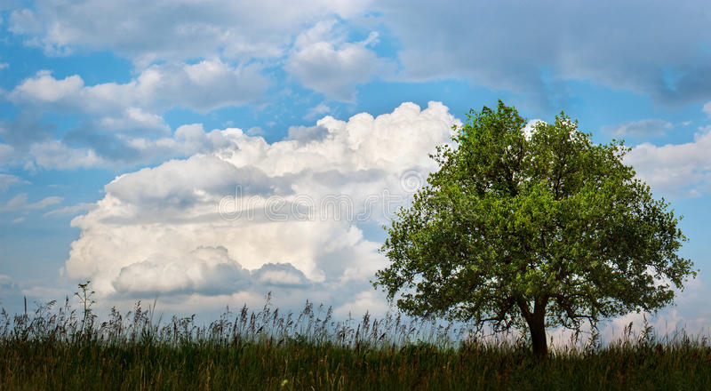 Download Tree in a field stock image. Image of outdoor, concept - 37729195