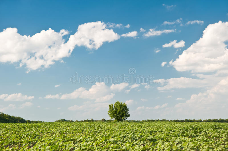 Tree and field. A rural landscape on a background of the dark blue sky royalty free stock photos