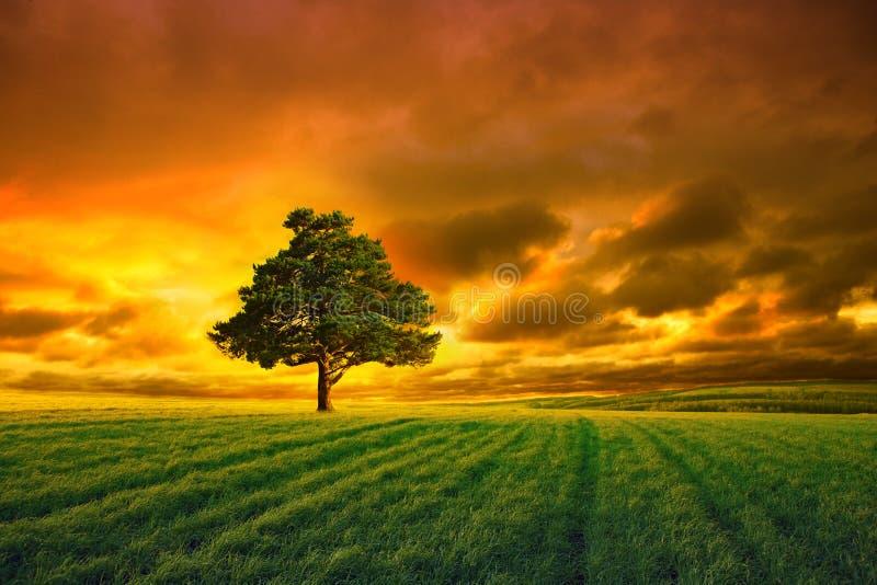 Tree in field and orange sky stock photos
