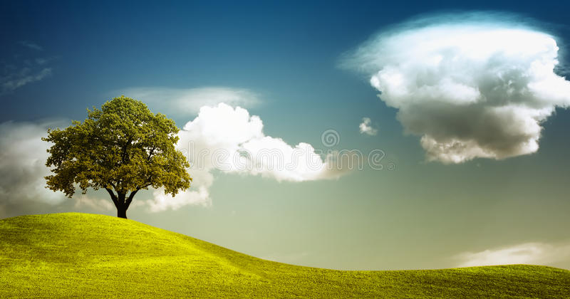 Tree on field panorama royalty free stock photography