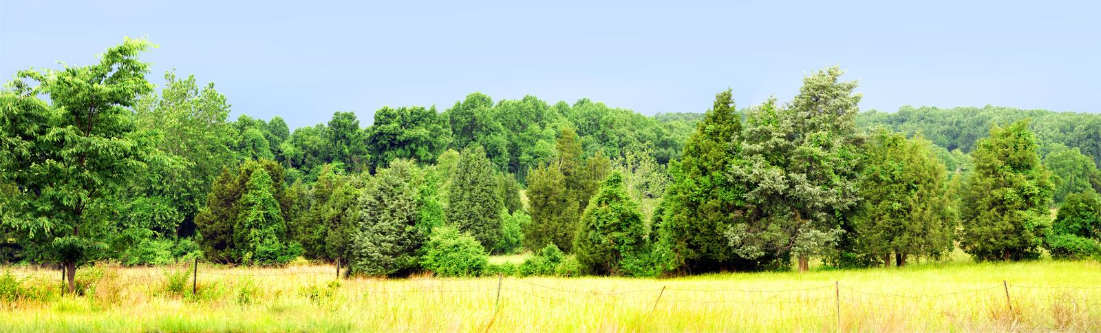 Download Tree and field panorama stock image. Image of outdoors - 4982665