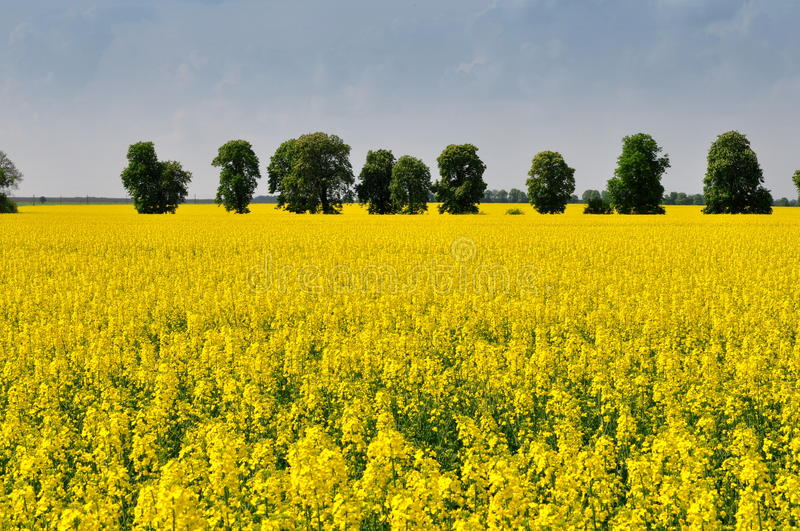 Download Tree and field with stock photo. Image of agriculture - 19352226