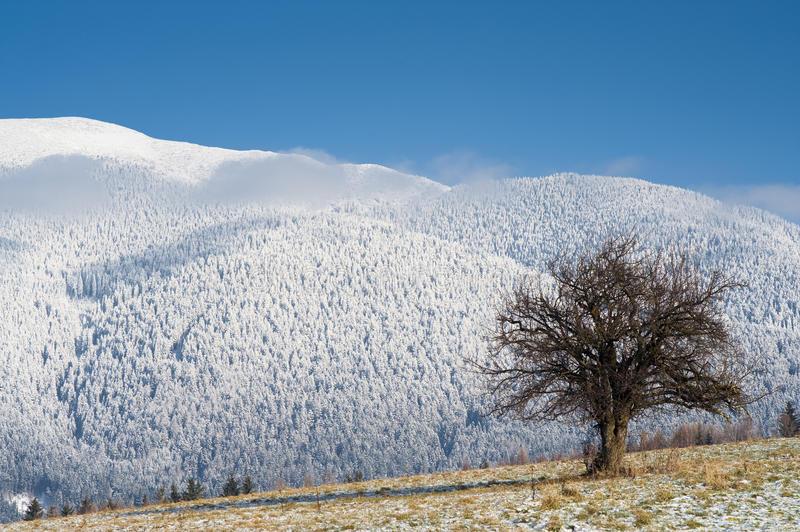 Download Tree, Field And Snowy Mountains Stock Image - Image: 12350045