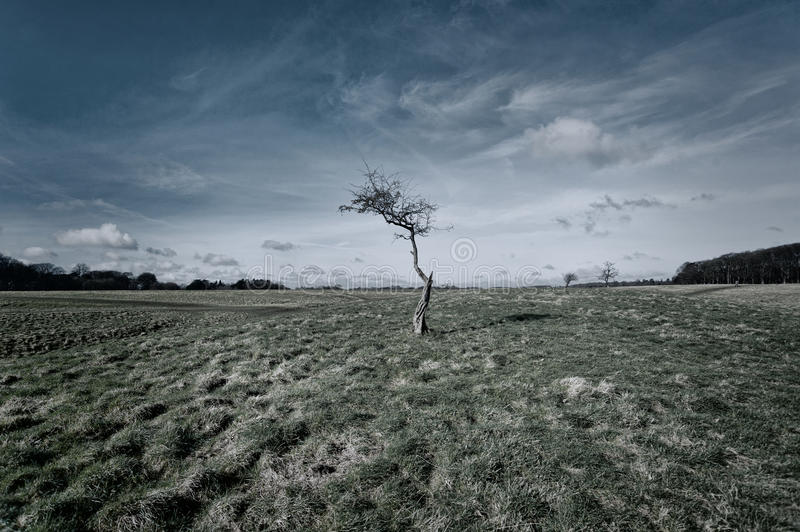 Download Tree stock photo. Image of countryside, plant, beauty - 38842986