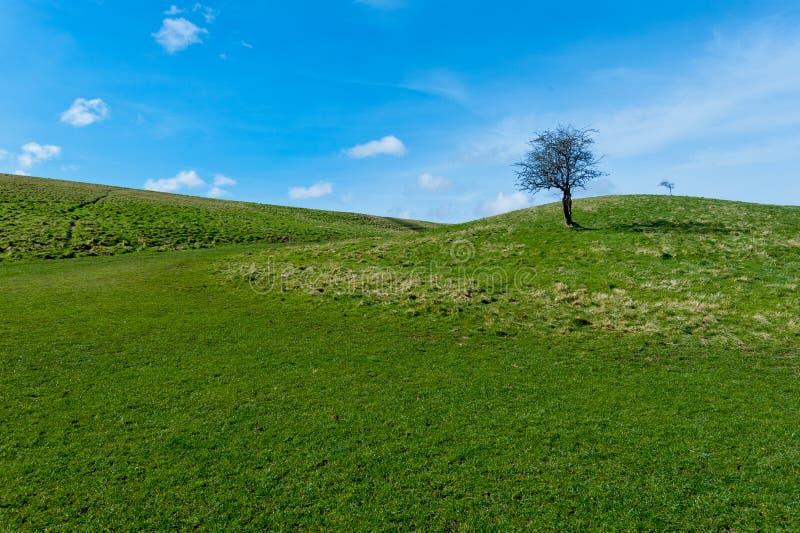 Download Tree Stock Photo - Image: 38843019