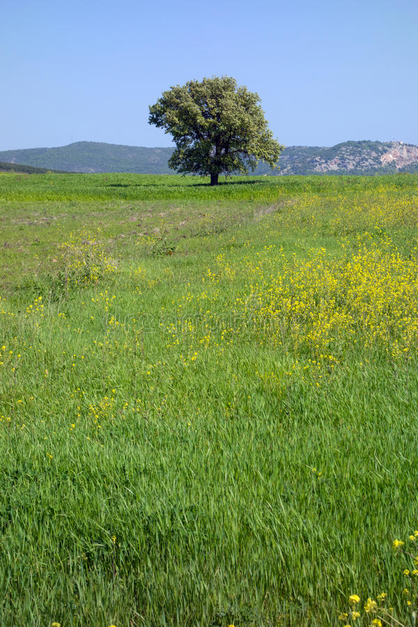 Download Tree in field stock image. Image of beautiful, meadow - 39886499