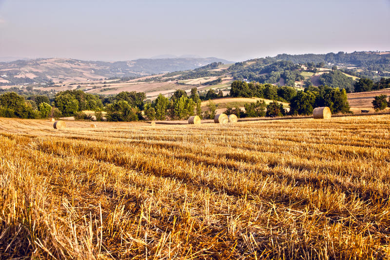 Download Tree And A Fields Grain With Bale Stock Photo - Image: 15236804
