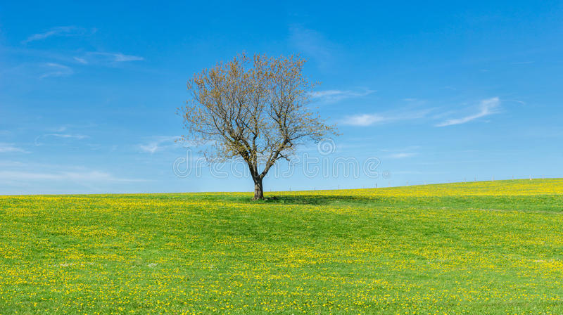 Tree on flower meadow, blue sky and white clouds stock images