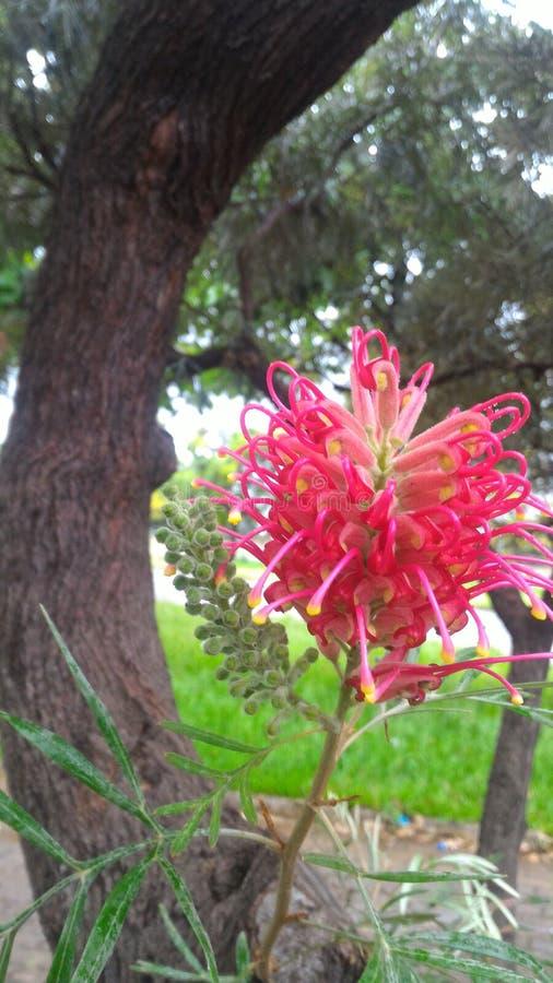 Tree flower stock image