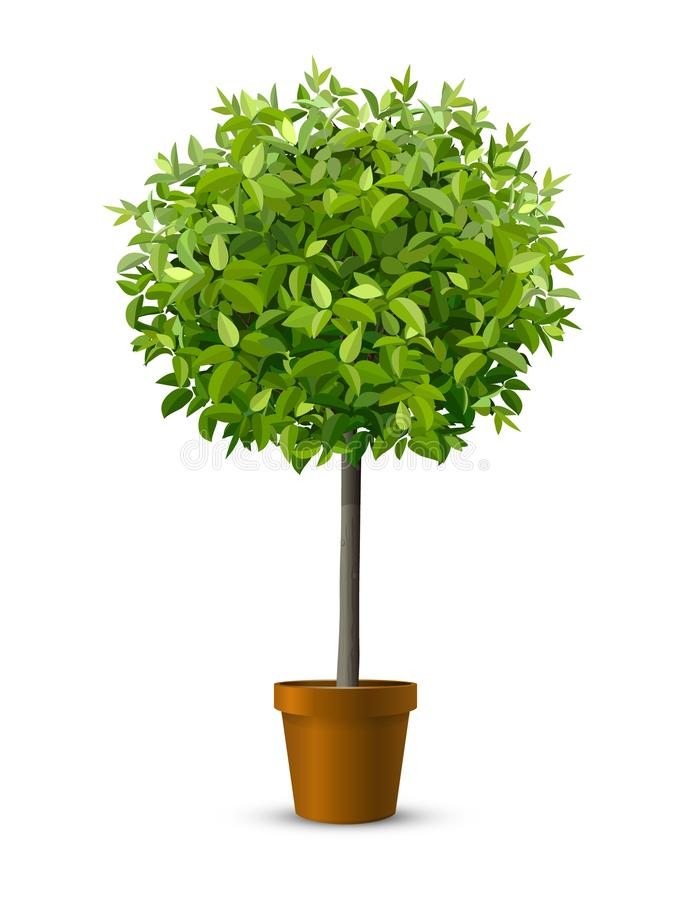 Tree in flowerpot. Vector realistic tree in a flowerpot. Houseplant for home or office interior decoration. Isolated on white background stock illustration