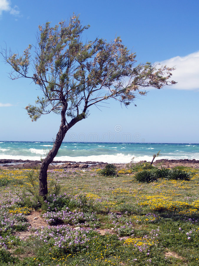 Tree, flowers and sea. Plants and flowers in river to the sea stock image