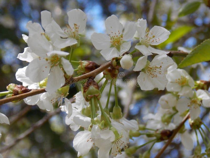 Tree flowers stock photos