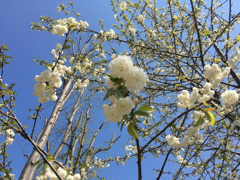 Download Tree and Flowers stock image. Image of spring, sunny - 90799177