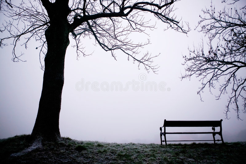 Download Tree in Fog stock photo. Image of nature, contrast, silhouette - 1789036