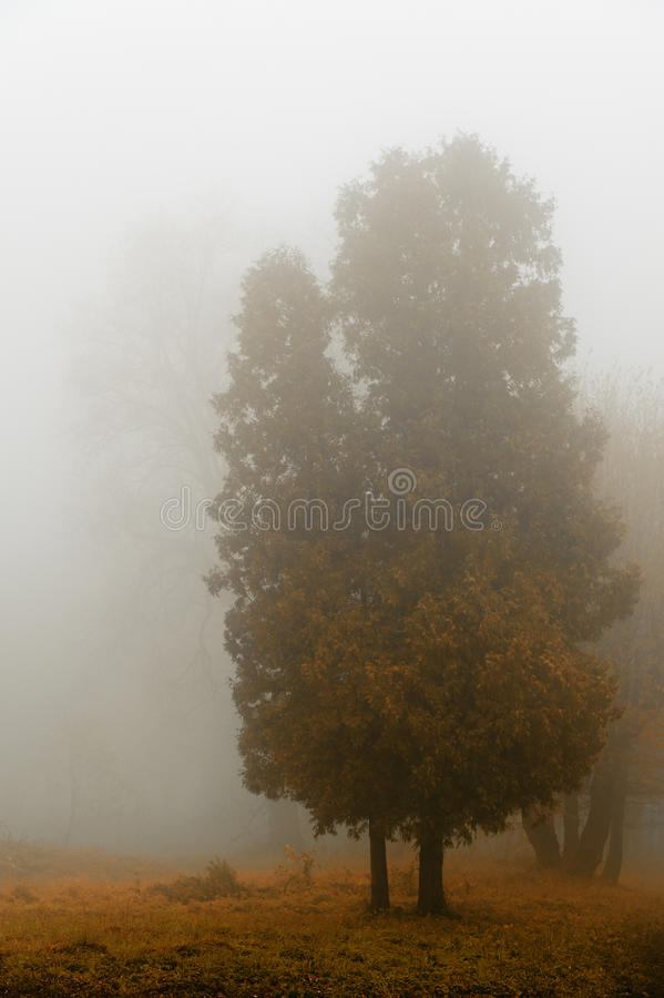 Download Tree in a fog. stock photo. Image of foreground, fantasy - 20733958