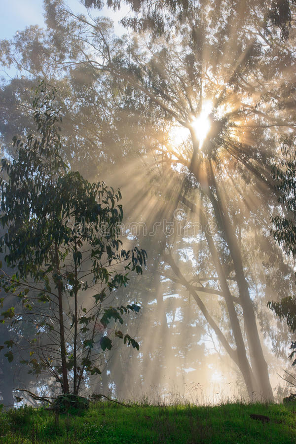 Download Tree And Fog Royalty Free Stock Image - Image: 22407976
