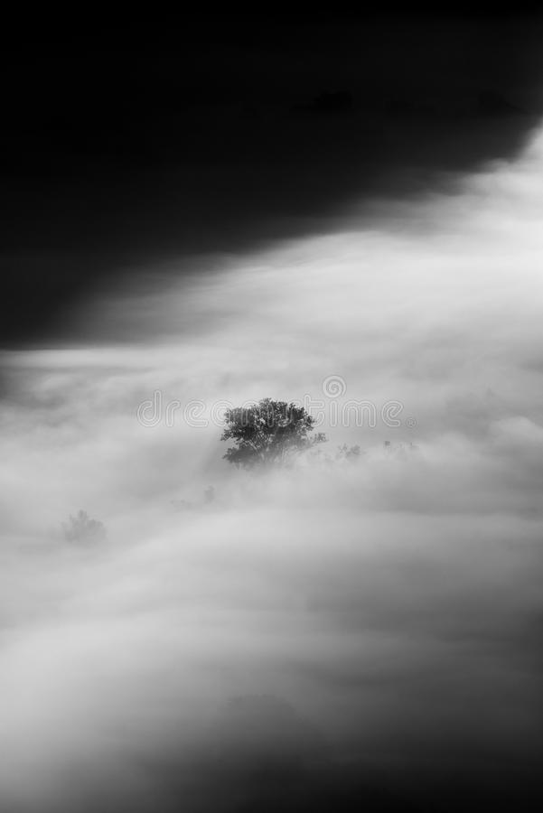 Tree in the fog black and white photo stock photography