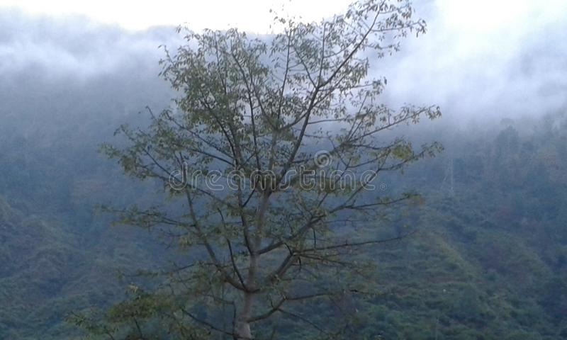 A tree in foggy cloudy weather in hill stations royalty free stock image