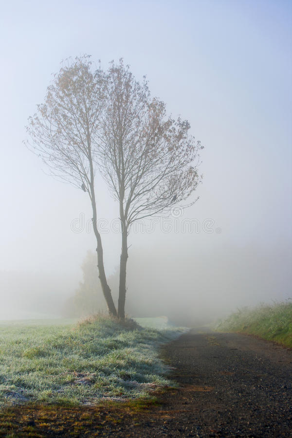 Tree with fog and frost stock images