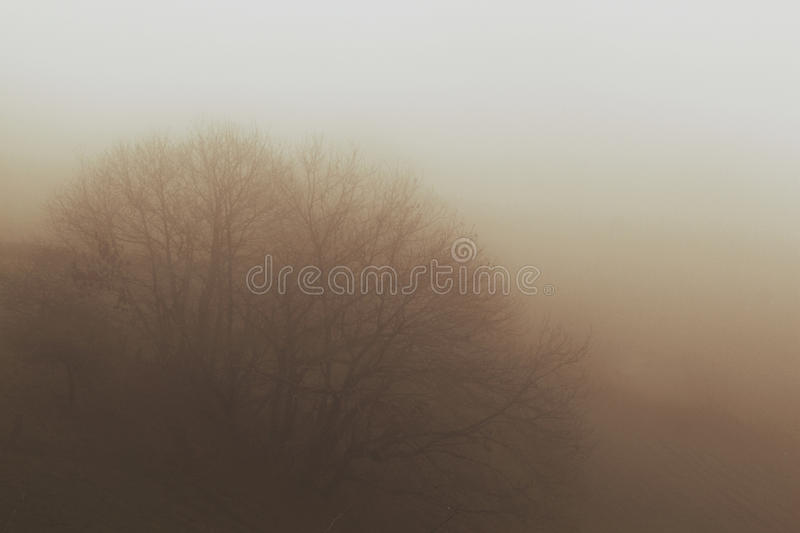 A tree after the fog stock photos