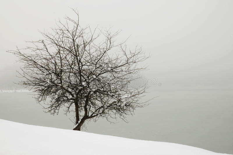 Tree in the fog by the lake covered with snow royalty free stock photos