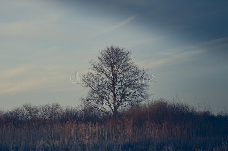 Tree in the fog stock photography