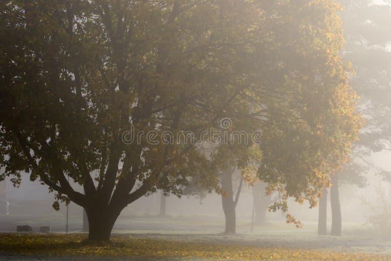 Tree, Fog, Morning, Mist royalty free stock photography