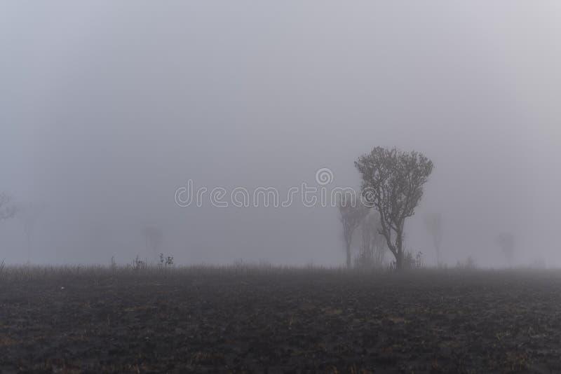 Tree in fog. Salang Luang national park, phetchabun, Thailand royalty free stock photo