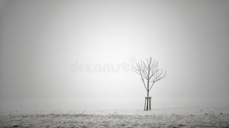 Tree In Fog royalty free stock images