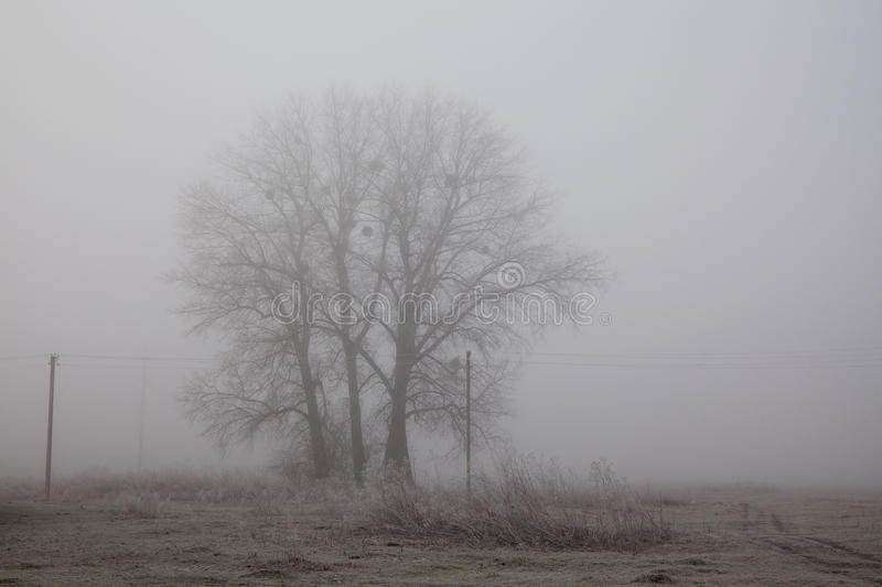 Tree foggy field landscape. Sadness and loneliness concept. Early winter morning, frost on the ground. noise film effect. Photo royalty free stock images