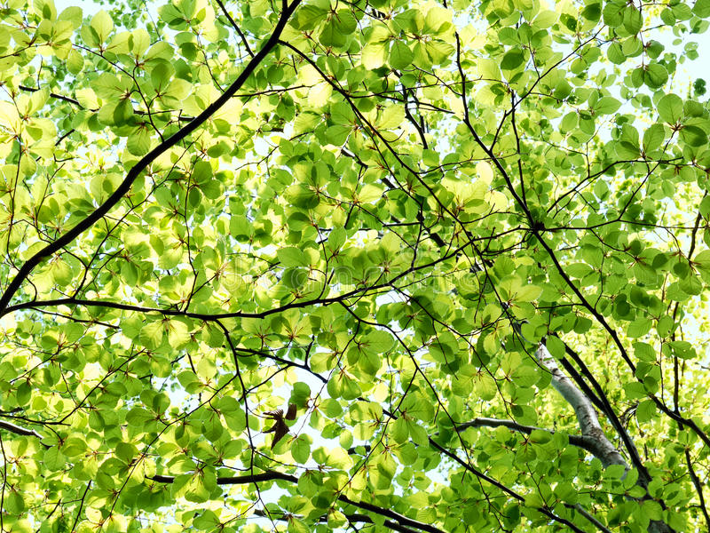 Download Trees in spring time stock image. Image of spring, foliage - 29829075