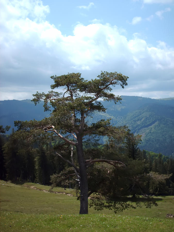 Download Tree and forest stock image. Image of landscape, tree - 12469281