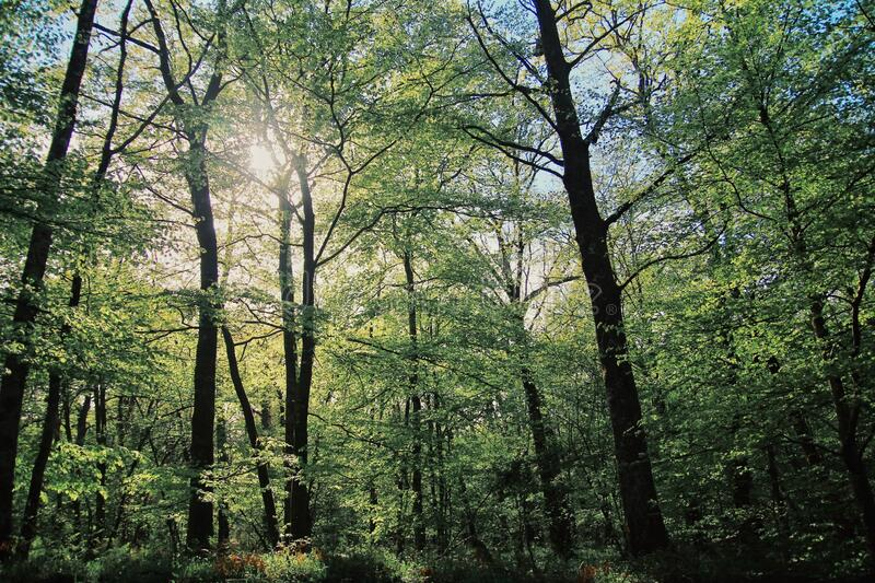 Tree and forest silhouette, a forest in France stock photo