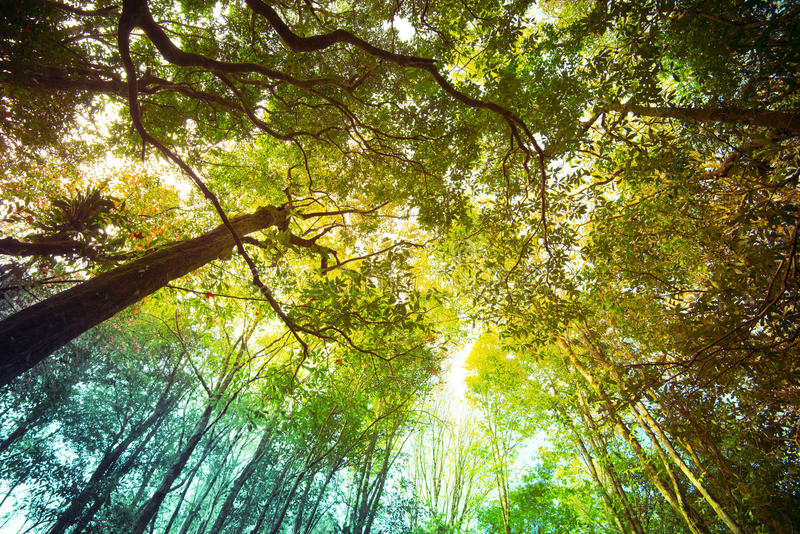 Tree in forest stock photo