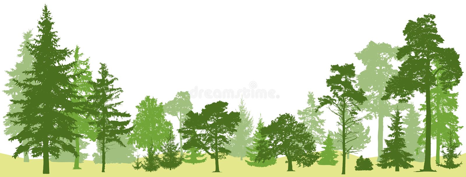 Tree forest vector. Isolated set trees evergreen pine royalty free stock image