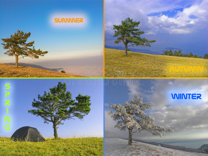 Tree in four seasons. A collection of images of the same tree in all four seasons royalty free stock photography