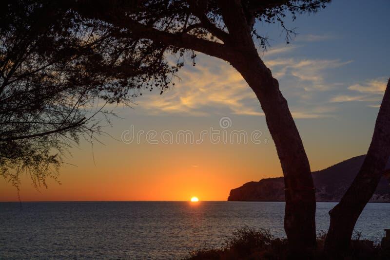 Tree framing sunset stock image