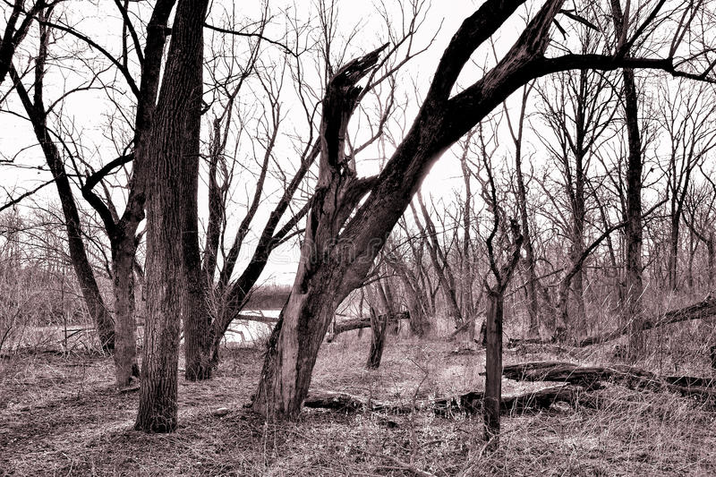 Tree friends. Hall's Creek Nature preserve in Warren County, Ohio. Several trees inhabit a local park near Morrow stock photography