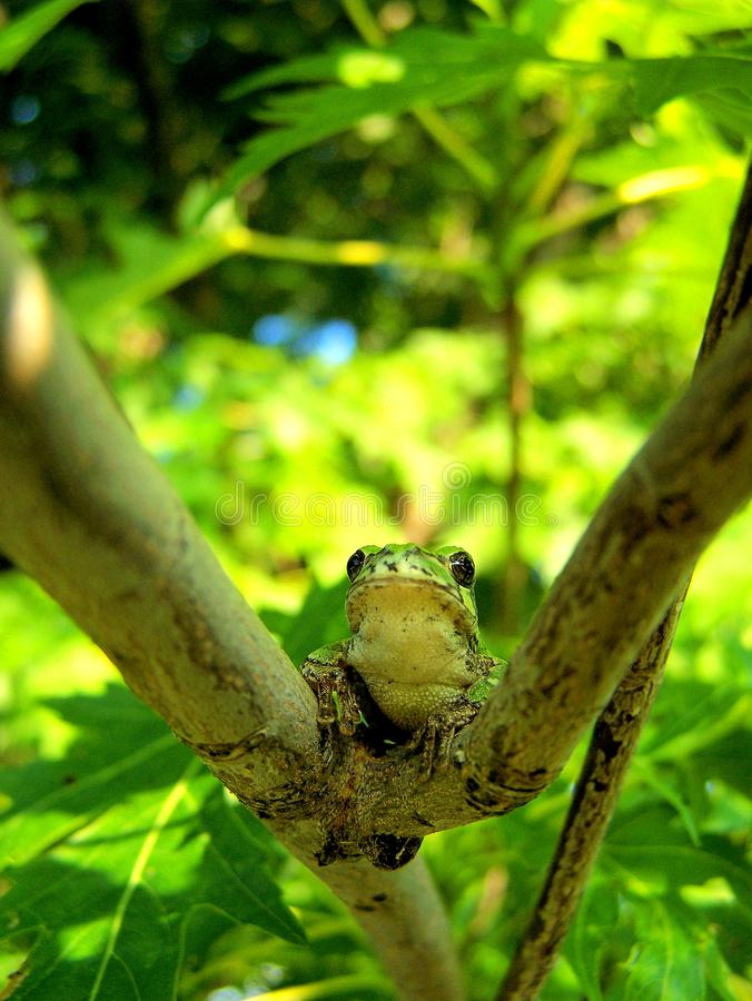 Download Tree Frog stock image. Image of cute, branches, slimy - 5938143
