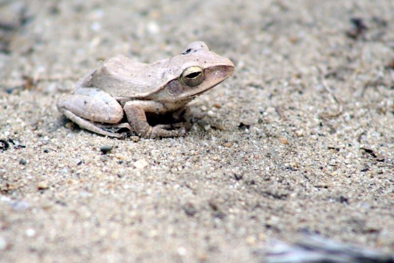 Tree frog  closeup stock photos