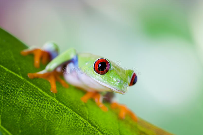 Tree frog on colorful background.  stock photo