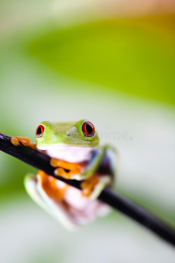Tree frog on colorful background.  stock photography