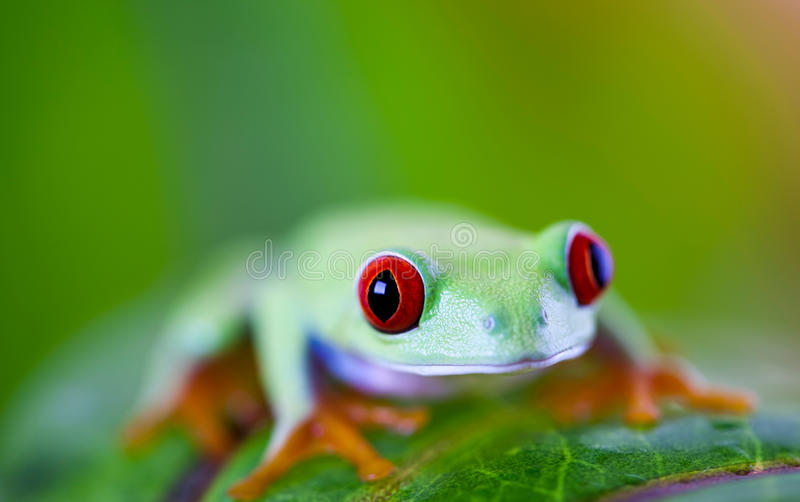 Tree frog on colorful background.  stock images