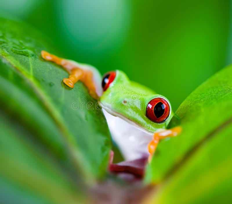 Tree frog on colorful background.  stock image
