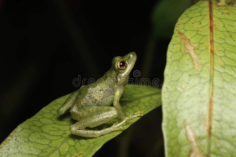 Tree frog looking up